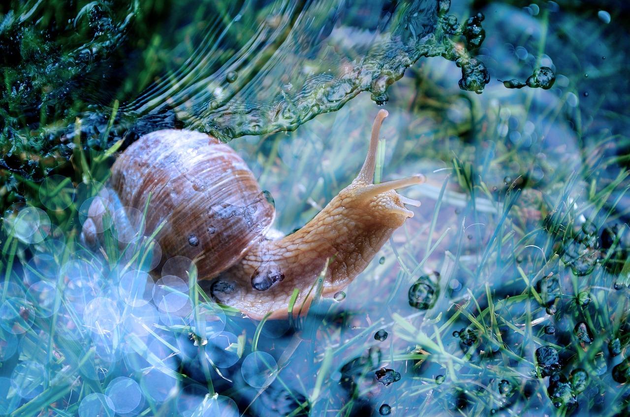 snail-605965_1280