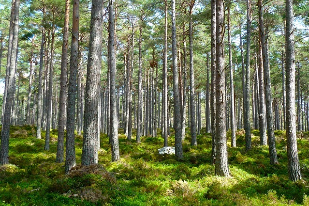 forest-272595_640